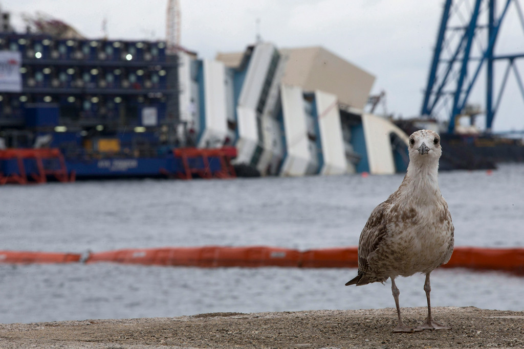 ". A bird stands in front of the Costa Concordia ship as it lies on its side on the Tuscan Island of Giglio, Italy, Sunday, Sept. 15, 2013. Authorities have given the final go-ahead for a daring attempt Monday to pull upright the crippled Costa Concordia cruise liner from its side in the waters off Tuscany, a make-or-break engineering feat that has never before been tried in such conditions. The ship capsized there 20 months ago, and Italy\'s national Civil Protection agency waited until sea and weather conditions were forecast for dawn Monday before giving the OK to try to right it. In a statement Sunday, the Civil Protection agency said the sea and wind conditions ""fall within the range of operating feasibility.\"" (AP Photo/Andrew Medichini)"