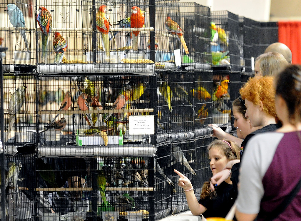 . Shoppers look over birds during the Reptile Super Show which is the world\'s largest reptile show with more than 500 tables of rare & unique animals including lizards, turtles, frogs, supplies at the Fairplex in Pomona, Calif., on Saturday, Jan.4, 2014.   (Keith Birmingham Pasadena Star-News)