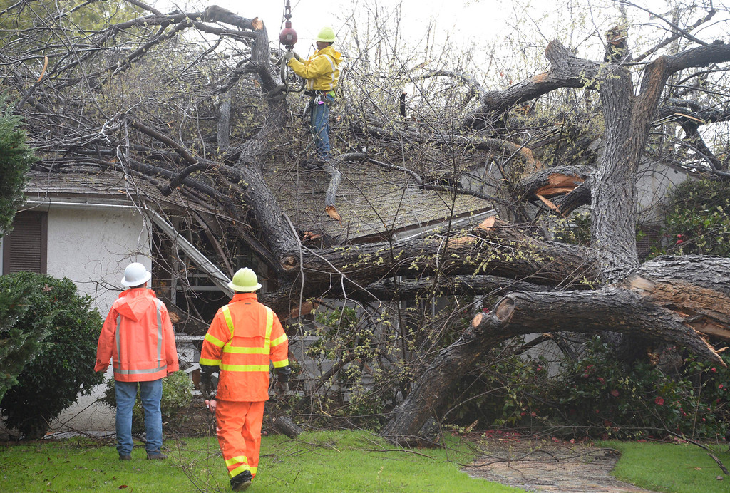 . Feb 28,2014. Burbank CA.  City working  start cutting on a huge tree that fall over from the heavy rains and winds by the storm Friday. No one was hurt at the house on the 300 blk of Beachwood. Photo by Gene Blevins/LA DailyNews