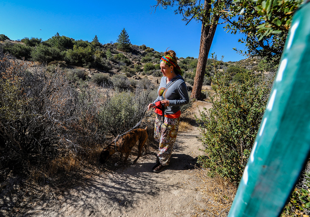 """. Search and rescue volunteer Lynne Lomerick, of Deer Lodge Park, and her dog Penny, search along the Pinnacle Trail for a missing German hiker in the San Bernardino Mountains near Lake Arrowhead on Friday, Oct. 4, 2013. Lomerick has volunteered three to four hours a day since search efforts began Tuesday, and plans to continue to search for the missing hiker until he is found or the search is called off, she said. \""""Just the fact that there\'s somebody\'s family member out missing is enough to move me to try to find them.\"""" (Photo by Rachel Luna / San Bernardino Sun)"""