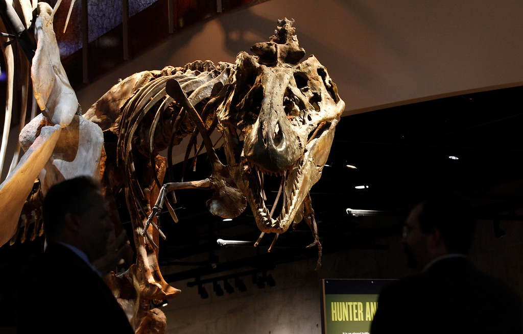 . Tyrannosaurus rex bones are on display at the Perot Museum of Nature and Science during a media preview  in Dallas, Wednesday, Nov. 14, 2012.  The museum set to open Dec. 1 was named for billionaire former presidential candidate Ross Perot and his wife, Margot, after their five children made a $50 million gift in honor of them. (AP Photo/LM Otero)