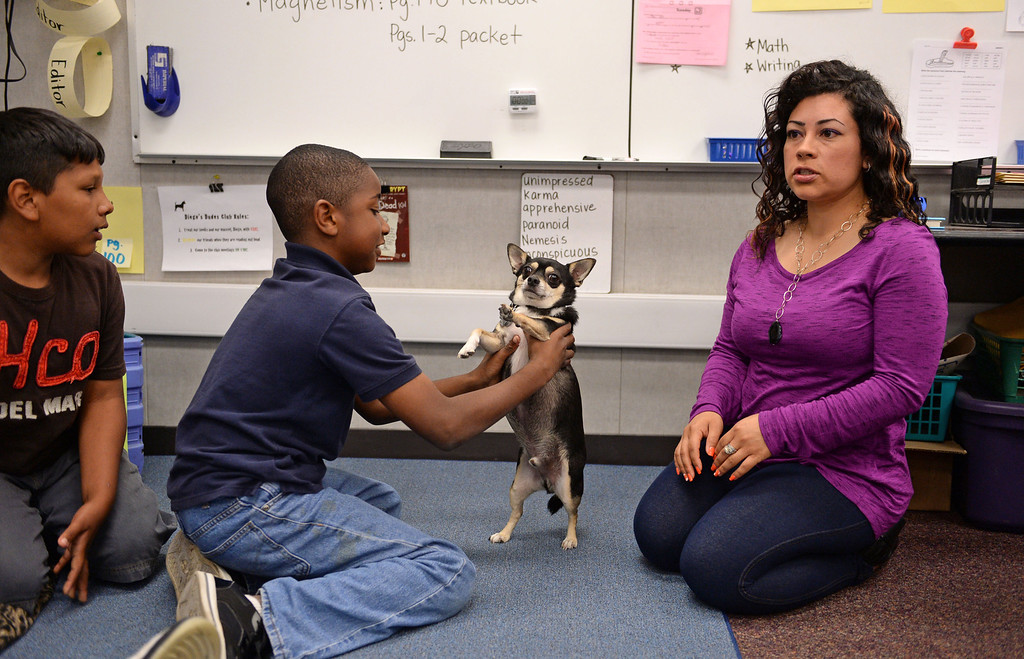 . Diego\'s Dudes lunchtime reading club at Felton Elementary School in Lennox. Teacher Alex Carrera brings her Chihuahua Diego to class as a mascot to help boys improve reading skills. Jose Cervantes and Charles Allen holds Diego. Photo by Brad Graverson 5-15-13
