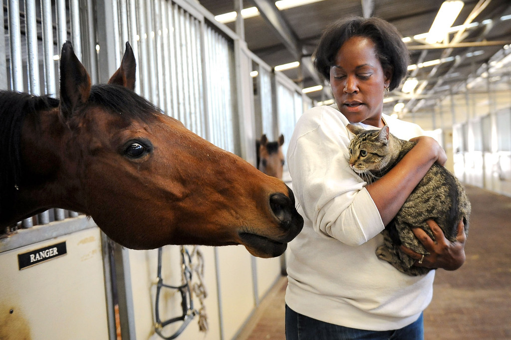 . LAPD equine keeper Nobel Merriett introduces Hieronymous the cat to Ranger in the LAPD horse barn February 5, 2014.  The barn received two cats Wednesday courtesy of Voice for the Animals.  The cats will help keep rodents under control around the barn.(Andy Holzman/Los Angeles Daily News)