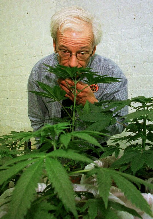 . FILE - In this Jan. 14, 1997 file photo, Denis Peron, founder of the Cannabis Cultivators Club, smells a northern lights marijuana plant in the club\'s growing room in San Francisco. Some medical marijuana supporters have said Proposition 19, the ballot measure to legalize pot, could undermine the credibility of the drug as a medical treatment, including Peron, the San Francisco activist who was the driving force behind the 1996 ballot measure that legalized medical marijuana in the state. (AP Photo/Eric Risberg, File)