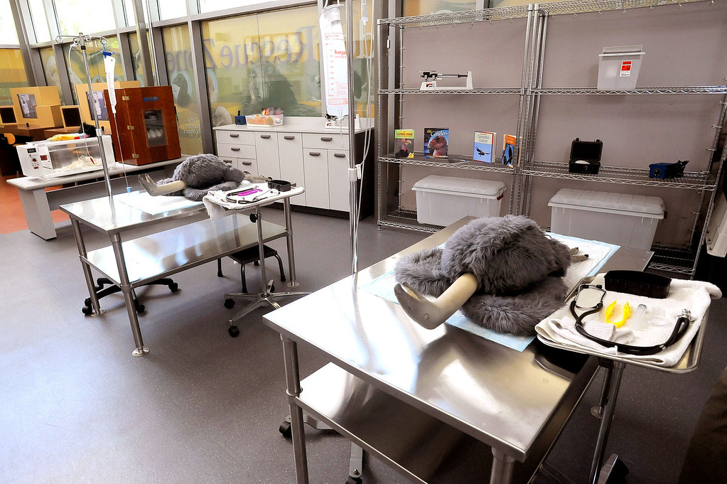. Plush California Condors used for education, await visitors in the Vet Lab area of  the California Condor Rescue Zone at the Los Angeles Zoo May 9, 2013. The L.A. Zoo has long participated in a federal program to help save the endangered bird, of which just 225 live in the wild.(Andy Holzman/Staff Photographer)