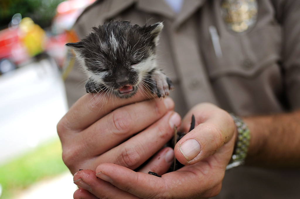 . An animal control officer holds one of six kittens that were rescued after a structure fire damaged two homes in the 17800 block of Vanowen St. in Reseda, CA April 10, 2014.(Andy Holzman/Los Angeles Daily News)