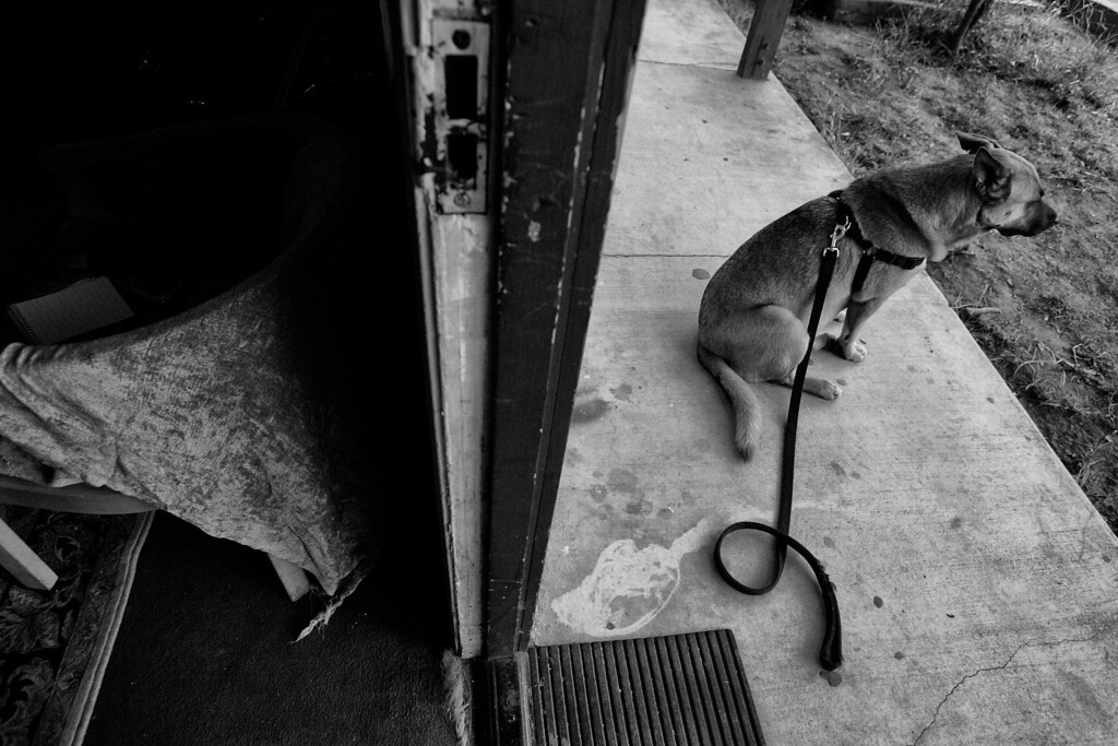 . Dorothy\'s dog, Gunner, waits at the motel.  Because Dorothy had a large dog, it took longer to find a permanent home for them.