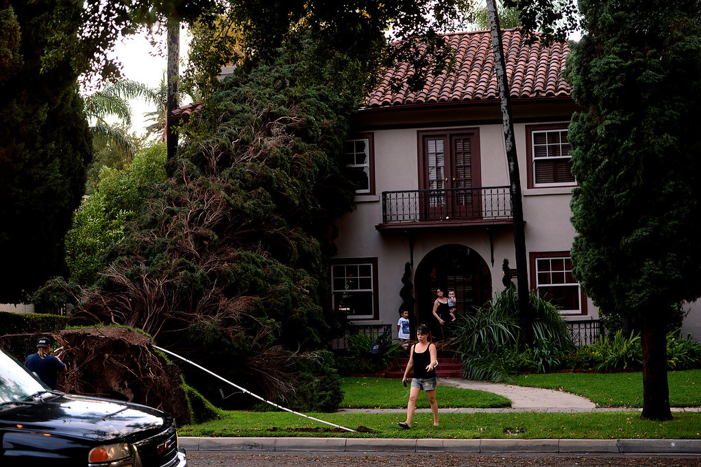 . Kristen Tunison accesses damage caused by tree that was blown over due to a storm at her mother\'s house along the 3800 block of Chapman Place in Riverside August 29, 2013.    The tree was believed to be 100 years old.  GABRIEL LUIS ACOSTA/STAFF PHOTOGRAPHER.