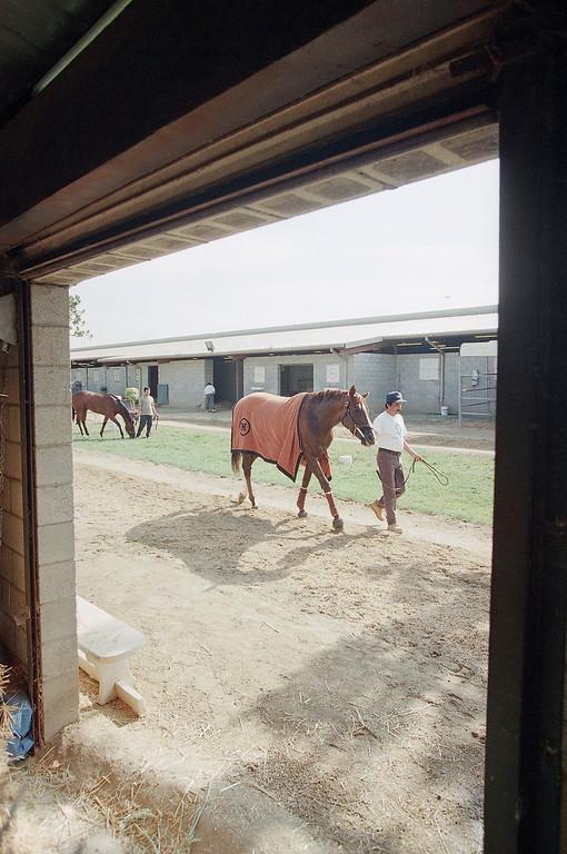. Hot-walker Santos Ramirez walks Gentlemen past a barn doorway in the stable area of Hollywood Park in Inglewood, California on Thursday, June 25, 1998.  (AP Photo/Chirs Pizzello)