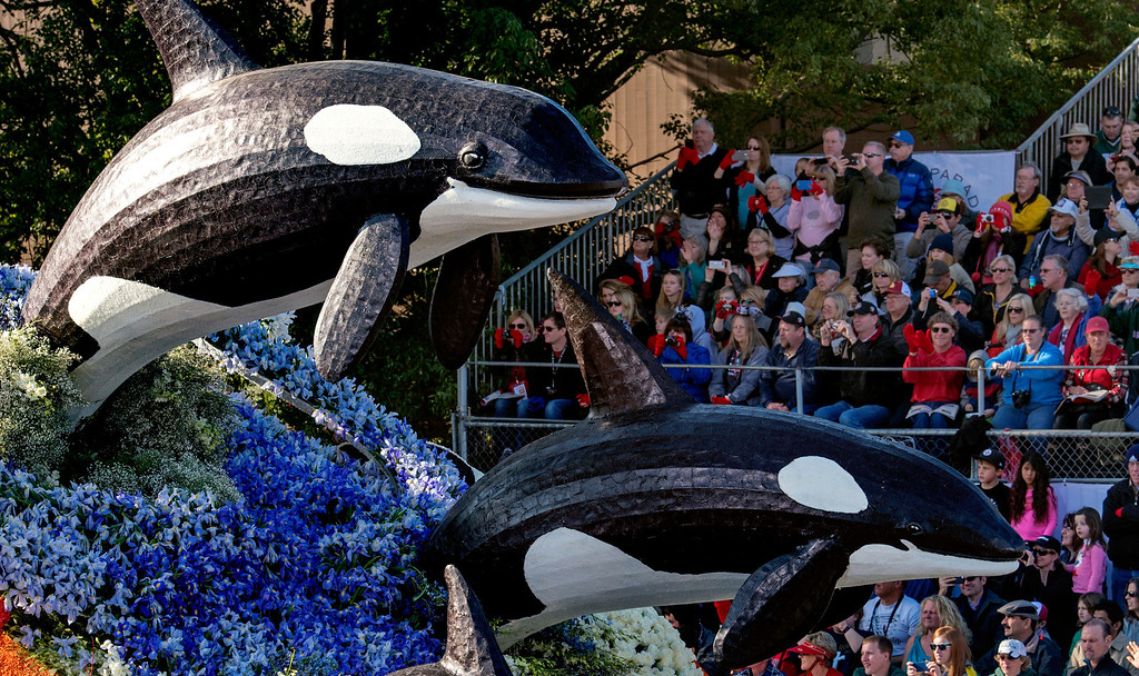 ". SeaWorld Parks and Entertainment ""Sea of Surprises\"" float during 2014 Rose Parade in Pasadena, Calif. on January 1, 2014. This float won the President\'s award for most effective floral use and presentation. (Staff photo by Leo Jarzomb/ Pasadena Star-News)"