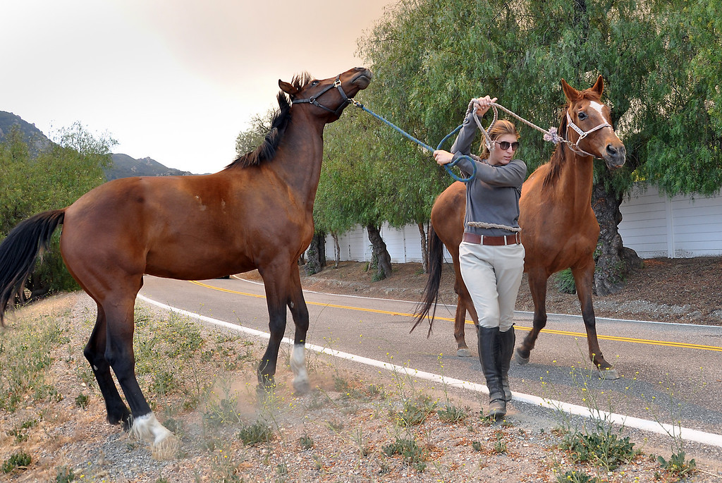. Katie Kramer evacuates horses on Hidden Valley Road in Hidden Valley.  A wildfire has burned over 10,000 acres.   Friday, May 3, 2013,   Tina Burch/Special to the Daily News