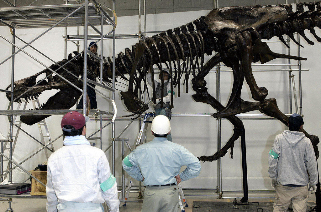 . TOKYO, JAPAN:  Workers check the display of the world\'s largest Tyrannosaurus Rex, named Sue, after competing its assembly for the Dinosaur Expo 2005 at the National Science Museum in Tokyo, 14 March 2005. Sue was discovered by fossil hunter Sue Hendrickson in 1990 and purchased by the Field Museum in Chicago at public auction in 1997.  (TOSHIFUMI KITAMURA/AFP/Getty Images)