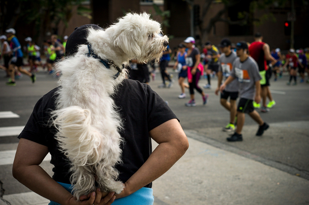 . An owner helps his dog get a better view near Grand Avenue during the 29th Los Angeles Marathon Sunday, March 9, 2014.   (Photo by David Crane/Los Angeles Daily News.)