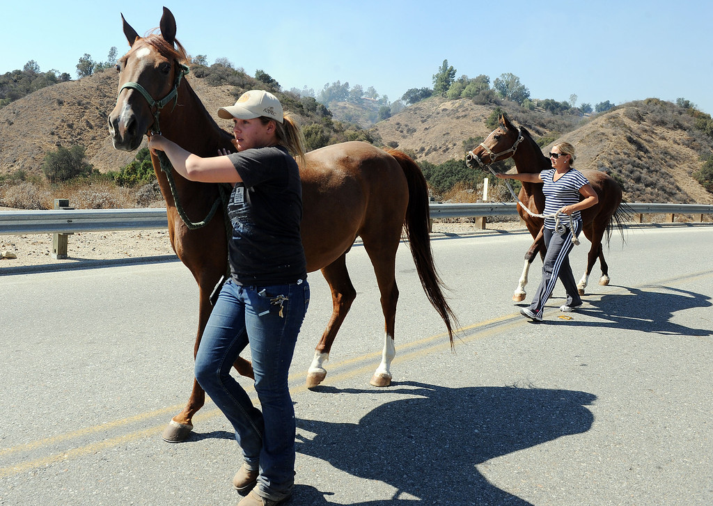 . Volunteers evacuate horses from a facility off of Live Oak Canyon Road during the Canyon Fire in La Verne Friday. Approximately 27 acres burned in a rugged area in the northern parts of La Verne Friday September 13, 2013. Some homes were evacuated north of Baseline Avenue but no homes were reported damaged. (Will Lester/Inland Valley Daily Bulletin)
