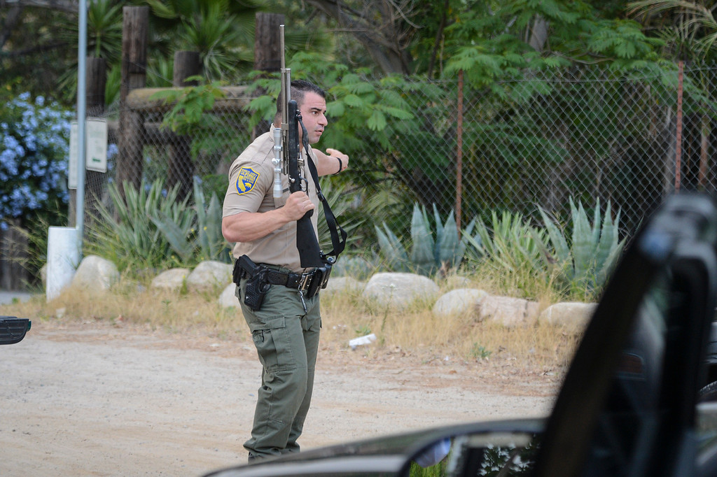 . Game warden JC Healy looks for the bear in the Shadow Hills area of Sun Valley early Wednesday morning.  The LAPD tracked the bear down and fish and game was able to dart the bear and to be released back into the wild.  Photo by David Crane/Staff Photographer
