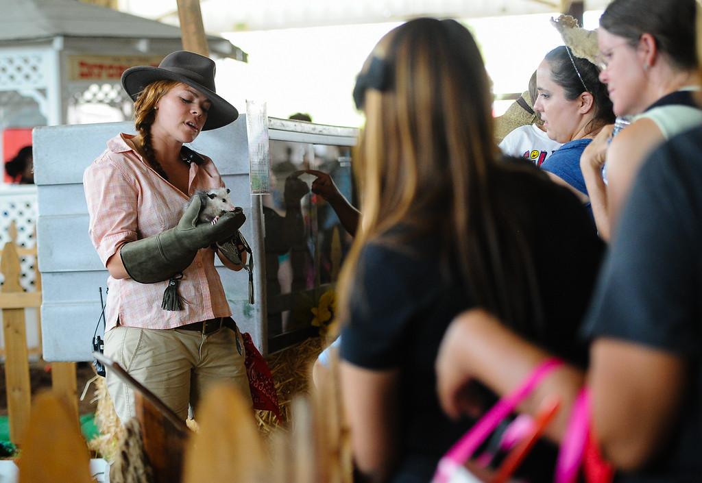 . Livestock is on display at the 91st annual Los Angeles County Fair in Pomona on Sept. 2, 2013. The fair will run through September 29. (Rachel Luna / San Bernardino Sun)